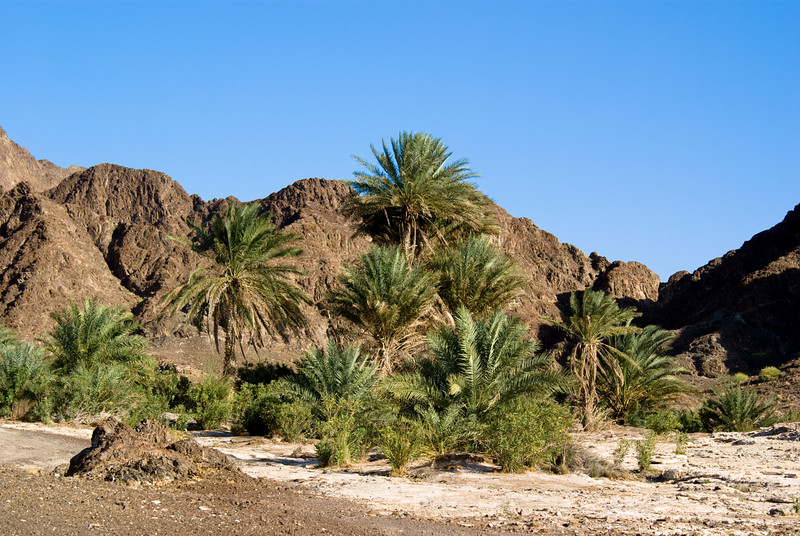 An oasis in the middle of the barren desert. To put it in context, this particular area is in the Hatta mountains, which forms a natural border between the UAE and Oman. We drove for many miles before coming across this greenery in such a stark and barren environment.