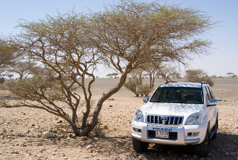 My Toyota Prado parked under a desert tree.