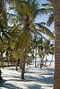 Palm trees on the beach.