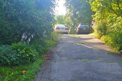 Mid-Summer 2013. Notice the orange Trumpet Vine blossoms on the driveway.