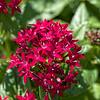 Flowers in St. Marys
