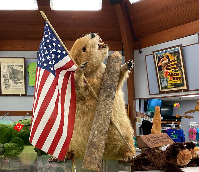 """Bucky the Beaver"""
