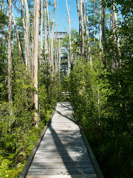 Walkway from Trail To Observation Tower