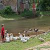 Feeding Silver Creek's Ducks