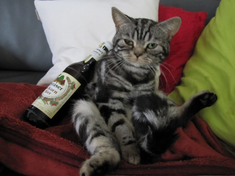 Their cat - Murphy - with a bottle of beer from David's brewery...