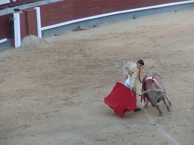 The crowd gasped and many women in the audience looked away.  Fortunately, he executed a defensive tactic and escaped, unharmed, but drenched in the bull's blood.