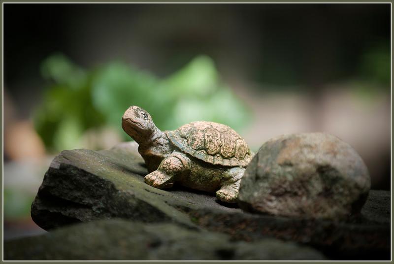 Fat German turtle near Berlin.