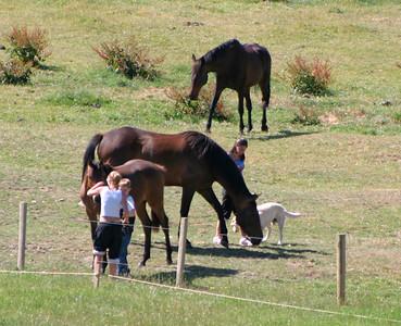031217 1628 Gerry's horses
