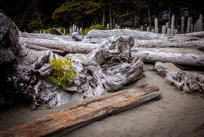 Dead wood on the beach of Tofino at low tide, Vancouver Island, British Columbia, Canada
