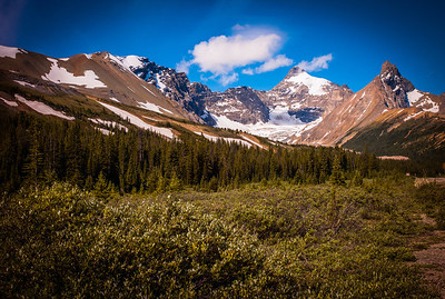 Pine trees and snow capped peaks, Alberta, Canada