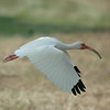 life is full of downs and ups<br /> Ibis