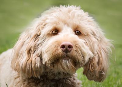 puppy (1 of 1)-4
