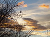 a bald eagle enjoying the colorful morning calm with me