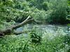 River Kelvin