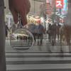 details of crowds - 群集の詳細