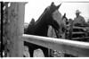 AZ137Globe rodeo