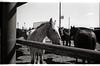 AZ146Globe rodeo