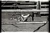 AZ094Globe rodeo