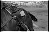 AZ031Globe rodeo