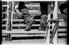 AZ089Globe rodeo