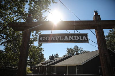 Goatlandia-Misti-Layne_0002
