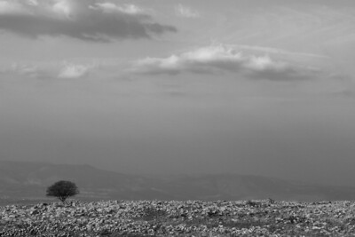 Lone Tree @ Golan