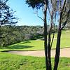 CapeSchanck_13BackTrees_0070