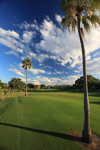 SanctuaryCovePalms_18FWVert_1119