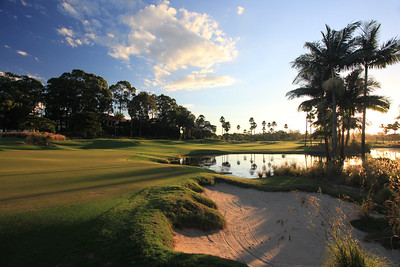SanctuaryCovePalms_10BackGreen_1172