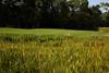 Brainerd, MN - JobNo_505 - 0510 May 2010 - MNMO Minnesota Monthly: Summer Travel 2010 - Trip for the Golfer - Brainerd MN - Cragun's Dutch Legacy course in Brainerd. Date: Saturday September 5, 2009 Photo by © Todd Buchanan 2009 Technical Questions: tbuchanan@greenspring.com; Phone: 612-226-5154. Keywords:  - Folder: MNMO_0510_505_Summer_2010_Brainerd_Legacy_Golf