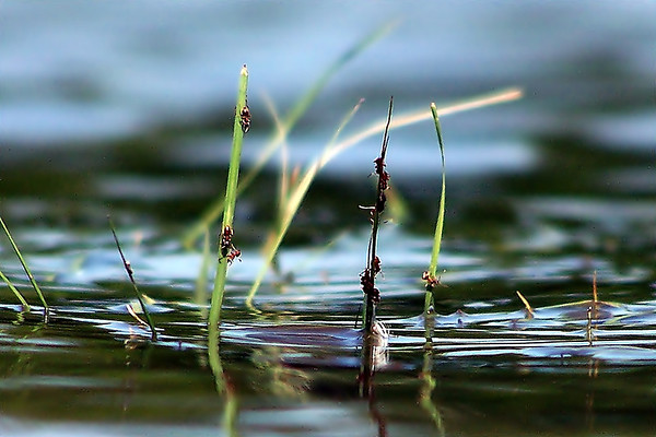 Water, Ants and Grass