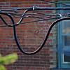 Spider Web - Perth Canada