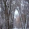 Trail Through the Woods - Iwen Park - Fargo ND