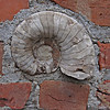 Nautilus Shell - imbedded in brick wall.