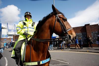 Goodison Park police horse