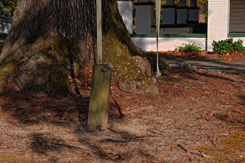 Tree swing, Lawrence, NC