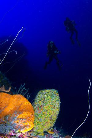 Grand Cayman (Focus Underwater) -- August 2013