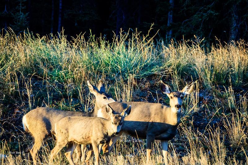 20131008 Wyoming _0477