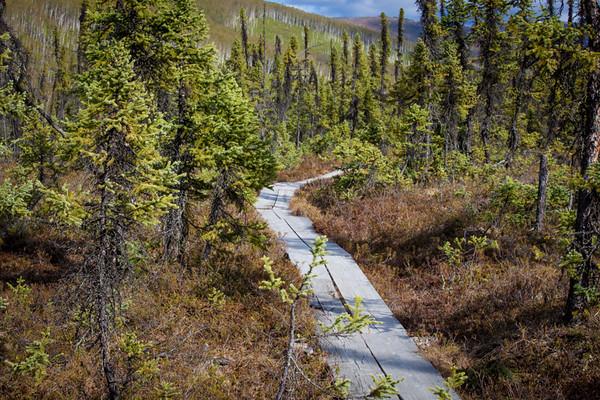 Granite Tors Trail, Chena River Alaska State Recreation Area