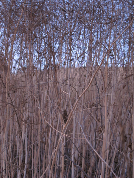 More reeds.