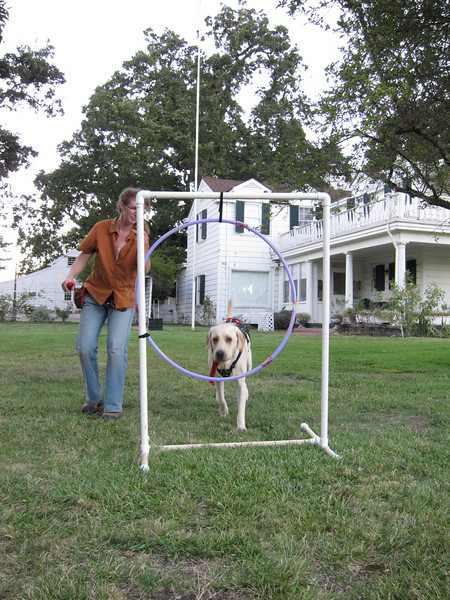 Hambone jumps through hoops for his mom, Marianne.