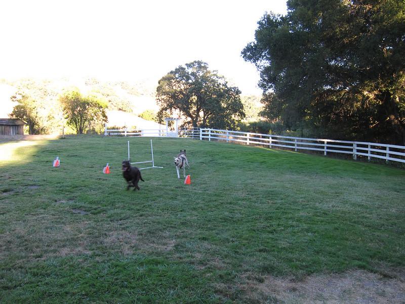 Hambone chasing Riley.