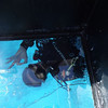 One of the ship's divers cleaning the bottom of the glass boat.