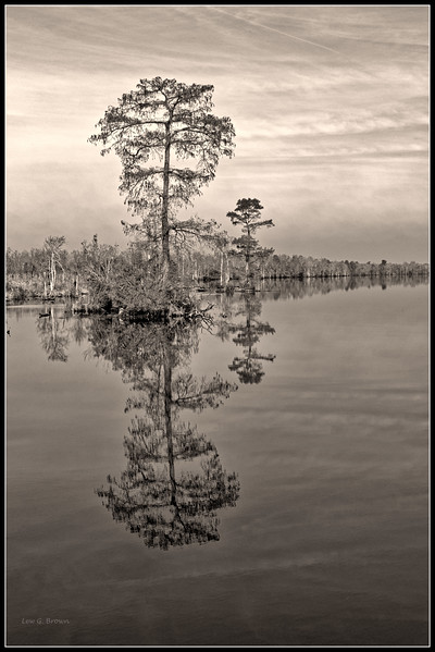 Cypress Trees - 3.  Black and White 1