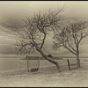"""""""Waiting for Spring."""" B&W.  View of Currituck Sound from Knotts Island."""