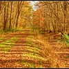 Washington Ditch:  4.5 mile cart path and ditch surveyed by George Washington in 1763.