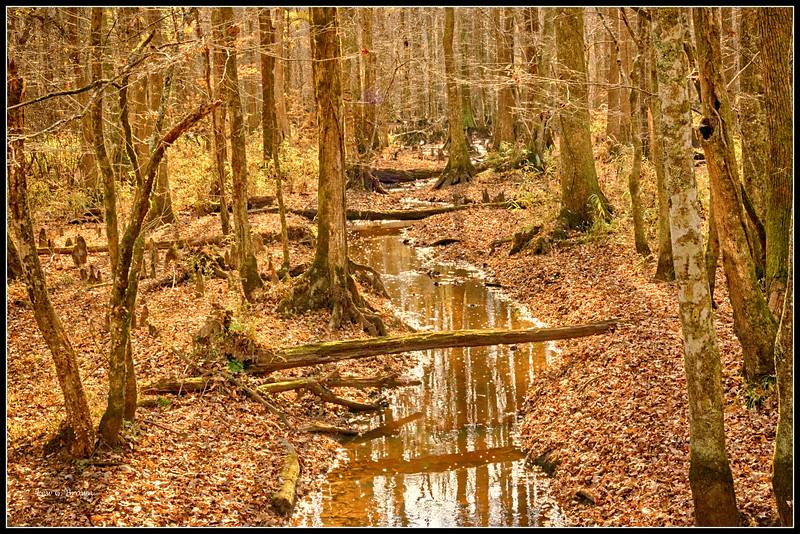 Swamp view.