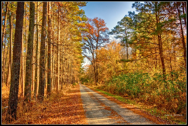 Road from the Great Dismal Swamp Office to Lake Drummond