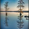 Cypress Trees - 2