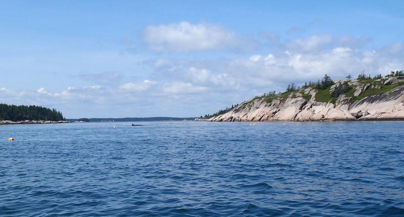 Minke Whale....